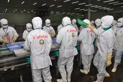 Les travailleurs travaillent dans une installation de transformation de crevettes dans Hau Giang, une province dans le delta du M Photo stock