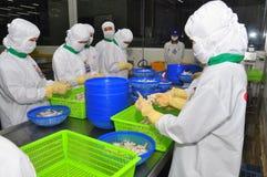 Les travailleurs travaillent dans une installation de transformation de crevettes dans Hau Giang, une province dans le delta du M Photos libres de droits