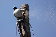Les travaux de dépose d'arbre Image stock