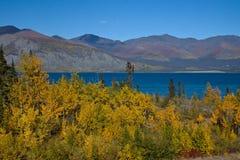 Les trembles d'or diffèrent des eaux profondes de vert bleu du lac Klaune Photos libres de droits