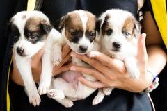Les trois chiens et animaux de bébé si mignons photo stock