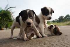 Les trois chiens et animaux de bébé si mignons images stock