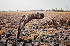 Les tronçons meurent sur la terre Photographie stock libre de droits