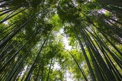 Les troncs d'arbre en bambou atteignent pour le ciel image stock