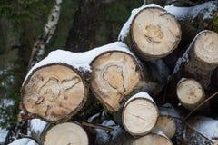Les troncs de coupe des arbres se trouvent sous la neige notation d'hiver firewood Photos stock