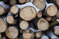 Les troncs de coupe des arbres se trouvent sous la neige notation d'hiver firewood Photographie stock libre de droits