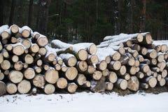 Les troncs de coupe des arbres se trouvent sous la neige notation d'hiver firewood Image libre de droits