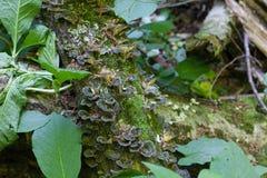 Les troncs de vieux arbres couverts de la mousse verte Photographie stock libre de droits