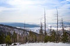 Les troncs des arbres dans les montagnes photographie stock libre de droits