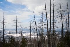 Les troncs des arbres dans les montagnes photo stock
