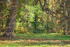 Les troncs des arbres pendant l'automne se garent à la soirée photos libres de droits