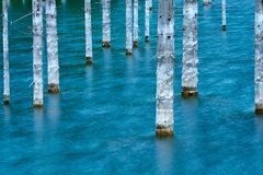 Les troncs desséchés des arbres submergés de sapin de Schrenk's qui se lèvent au-dessus des water's apprêtent du fond du lac Photos libres de droits