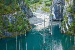 Les troncs desséchés des arbres submergés de sapin de Schrenk's qui se lèvent au-dessus des water's apprêtent du fond du lac Photographie stock