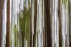 Les troncs et l'auvent d'arbre brouillés par mouvement produisent l'image abstraite Photographie stock libre de droits