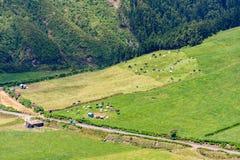 Les troupeaux de vaches frôlent sur un champ d'herbe à côté d'une route rurale et d'une grange photographie stock libre de droits