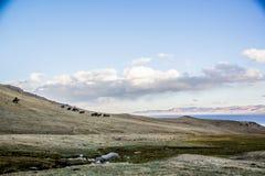Les troupeaux s'approchent de la chanson Kol Photo stock