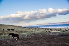 Les troupeaux s'approchent de la chanson Kol Photographie stock