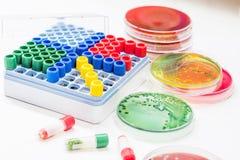 Les tubes de Microbank pour maintiennent l'agent pathogène d'isolement dans le congélateur Photographie stock