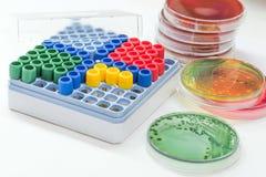 Les tubes de Microbank pour maintiennent l'agent pathogène d'isolement dans le congélateur Images stock