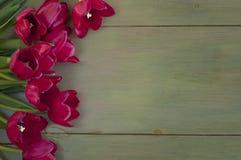 Les tulipes assez rouges sélectionnées du jardin sur le Faux ont peint le bois vert, le fond rustique avec la pièce ou l'espace po Photos stock