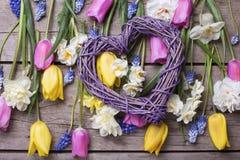 Les tulipes colorées de ressort, narcisse, fleurs de muscaries et entendent Image libre de droits
