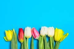 Les tulipes colorées fleurit dans une rangée sur le fond bleu avec l'espace libre Mothersday ou concept de ressort images stock