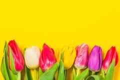 Les tulipes colorées fleurit dans une rangée sur le fond jaune avec l'espace libre Mothersday ou concept de ressort Images libres de droits