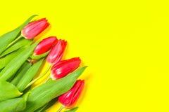 Les tulipes colorées fleurit dans une rangée sur le fond jaune avec l'espace libre Mothersday ou concept de ressort image libre de droits