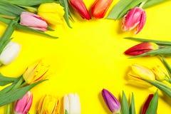 Les tulipes colorées fleurit sur le fond jaune avec l'espace libre Mothersday ou concept de ressort photo stock