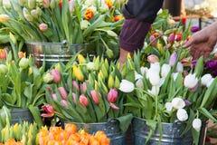 Les tulipes colorées sur l'affichage aux agriculteurs lancent sur le marché au printemps Photo libre de droits
