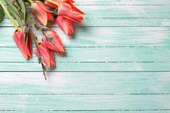 Les tulipes et le saule de chat de corail frais sur la turquoise ont peint en bois Photos libres de droits
