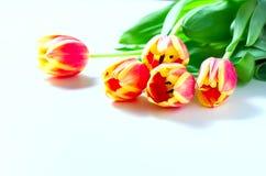 Les tulipes et les chatons oranges de chat aiment le romance de valentine de coeur sur le fond blanc Photos libres de droits