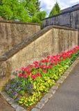 Les tulipes et m'embrassent les fleurs rapides dans le parterre dans Reichenau Images libres de droits