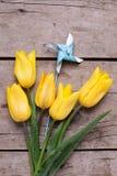 Les tulipes jaunes de ressort fleurit et moulin à vent bleu décoratif sur r Photographie stock