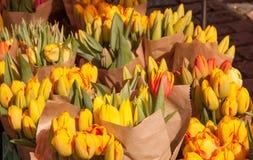 Les tulipes jaunes sur l'affichage aux agriculteurs lancent sur le marché en mars Photos libres de droits