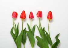 Les tulipes naturelles fleurit sur le fond blanc - concept d'amour et de vacances Photo libre de droits