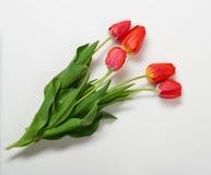 Les tulipes naturelles fleurit sur le fond blanc - concept d'amour et de vacances Image stock