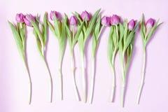 Les tulipes roses ont arrangé dans une rangée sur un fond rose Carte de voeux pour le jour du `s de valentine Photo stock
