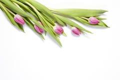 Les tulipes roses sur un fond blanc comme carte postale au jour du ` s de Valentine photo libre de droits