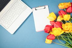 Les tulipes rouges et jaunes, l'ordinateur portable, bloc-notes sur un appartement bleu de fond étendent Copyspace Photographie stock