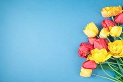 Les tulipes rouges et jaunes sur un appartement bleu de fond étendent Copyspace Photo stock