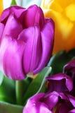 Les tulipes se ferment vers le haut photos stock