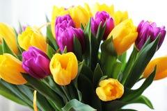 Les tulipes se ferment vers le haut image libre de droits