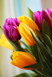 Les tulipes se ferment vers le haut photographie stock libre de droits