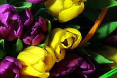 Les tulipes se ferment vers le haut photographie stock