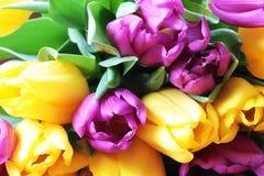 Les tulipes se ferment vers le haut photo libre de droits
