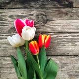 Les tulipes se rassemblent sur le fond en bois de planches de grange foncée Photos stock