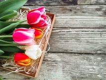 Les tulipes se rassemblent sur le fond en bois de planches de grange foncée Images stock