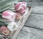 Les tulipes se rassemblent sur le fond en bois de planches de grange foncée Image libre de droits