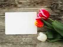 Les tulipes se rassemblent sur le fond en bois de planches de grange foncée Image stock